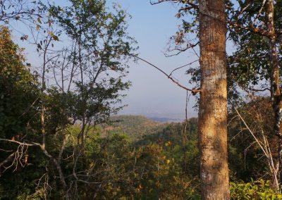 Burma Forest